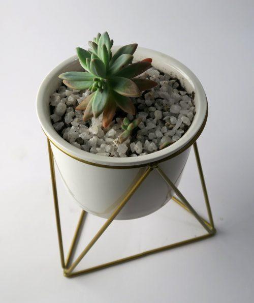 planta pedestal blanco suculenta